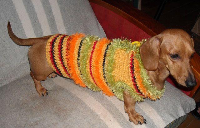 А ось і модна собачка мотя в шубі