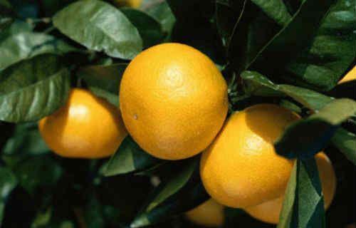 Апельсинова дієта для схуднення